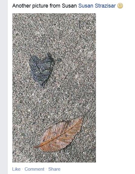 Susan leaf